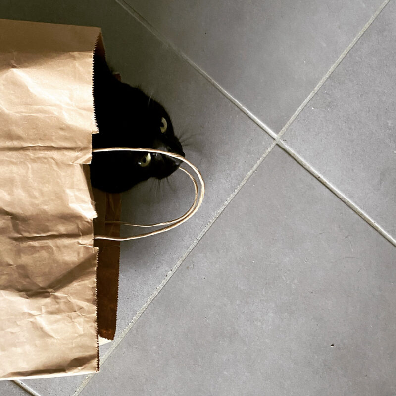 Cat poking it's head out of a brown bag
