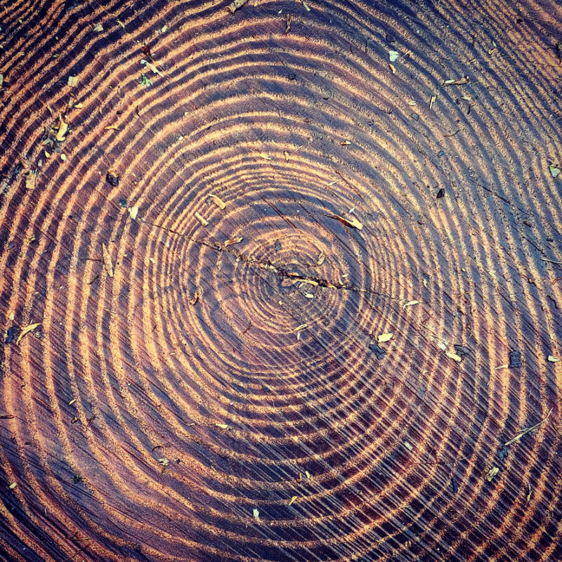 Tree stump rings